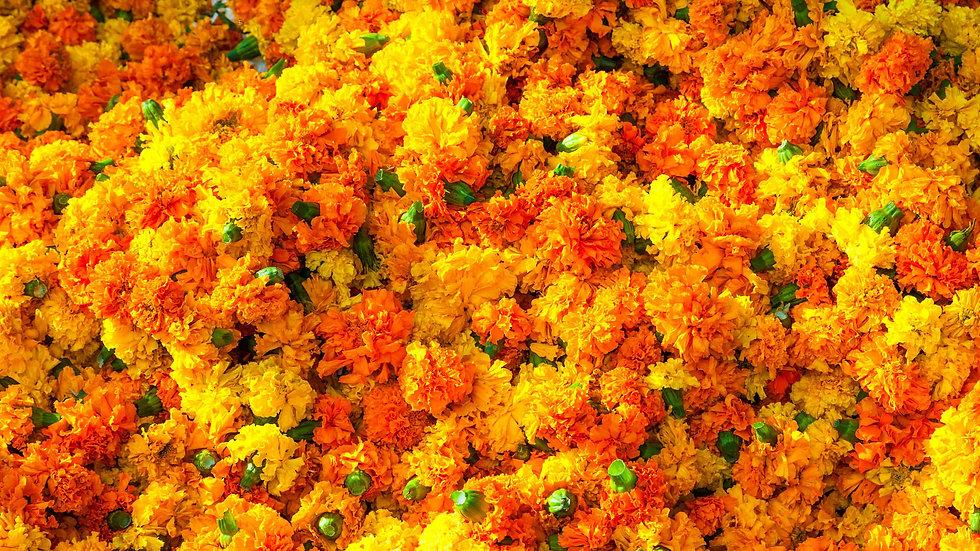 Marigold(Yellow/Orange)