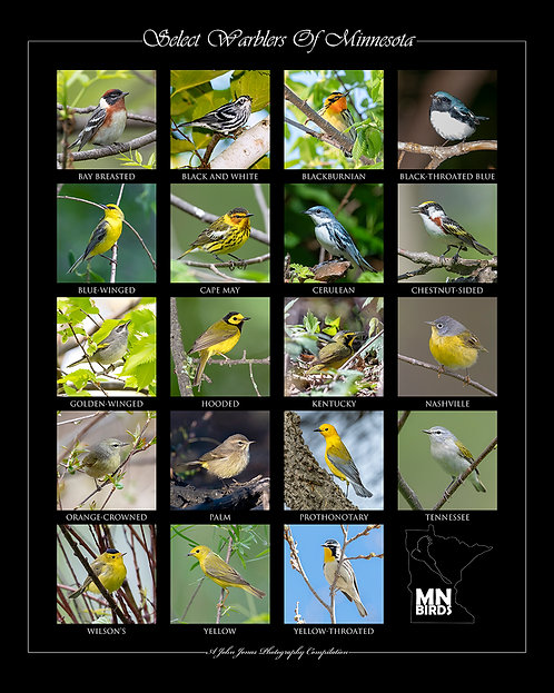 """Select Warblers Of MN (16""""x20"""")"""