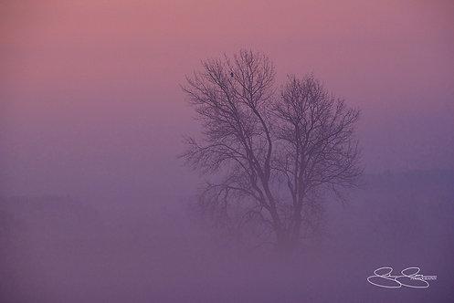 """Morning Fog (36""""x24"""")"""