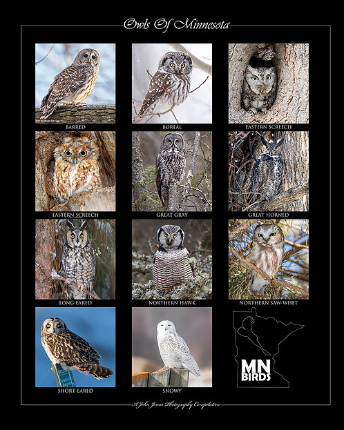 "Owls Of MN (16""x20"")"