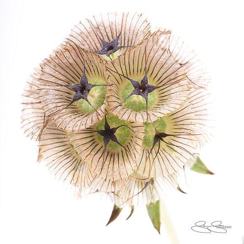 "Dried Flora (30""x30"")"