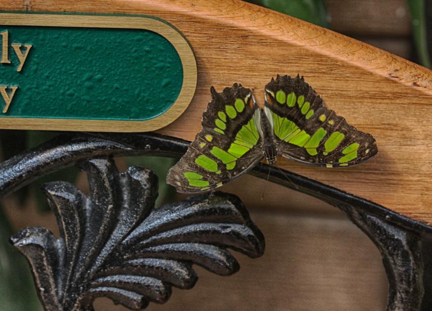 A Malachite On A Bench