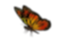 transparent-butterfly-images-6.png
