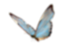 transparent-butterfly-images-1.png