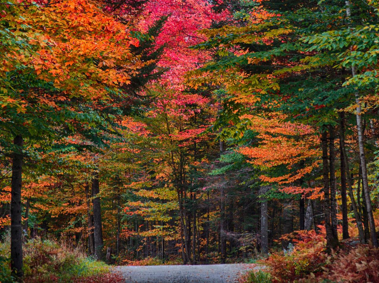 A Dirt Road In Autumn