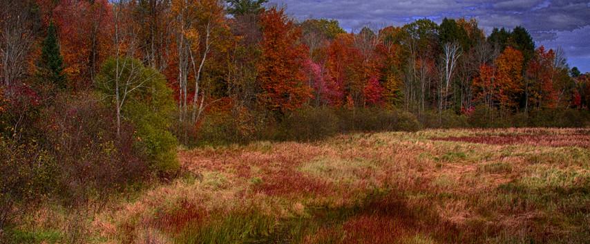 An Autumn Field