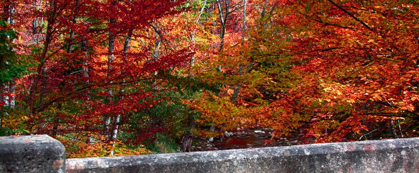 Foliage Along A Stream