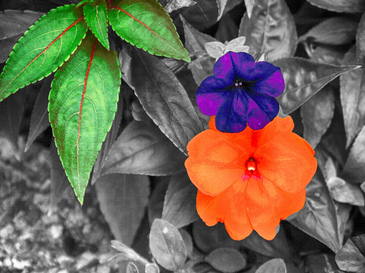 Multi - Colored