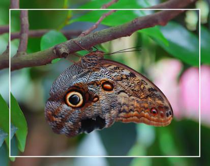 An Great Owl