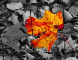 2008_10_15_0016-Web Bwb