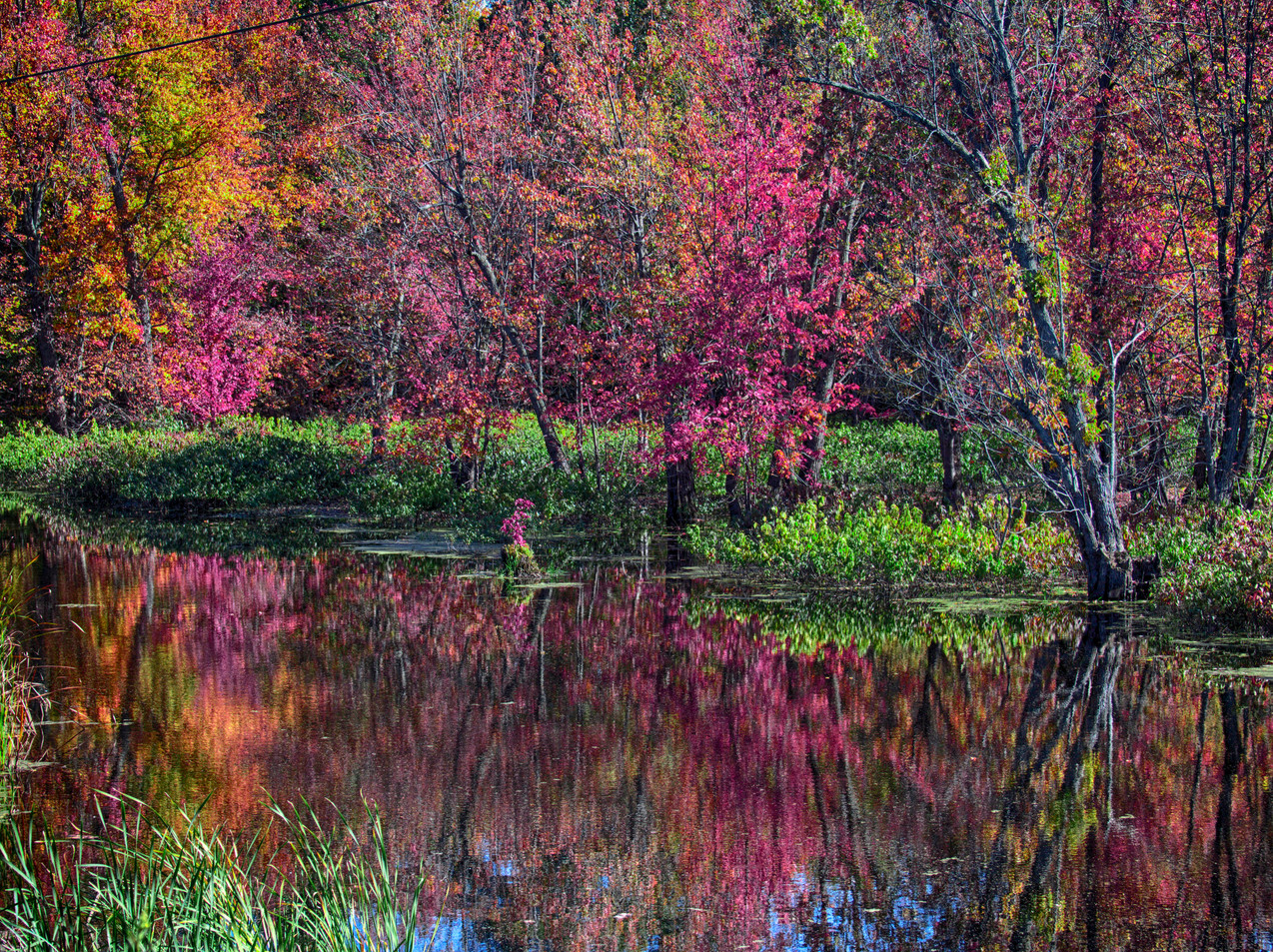 Foliage Reflections In A Small Pond