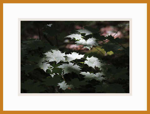 2009_06_23_1705-Niquette-Ba FrBrz.jpg