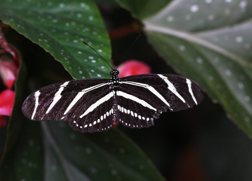 A Floral Zebra