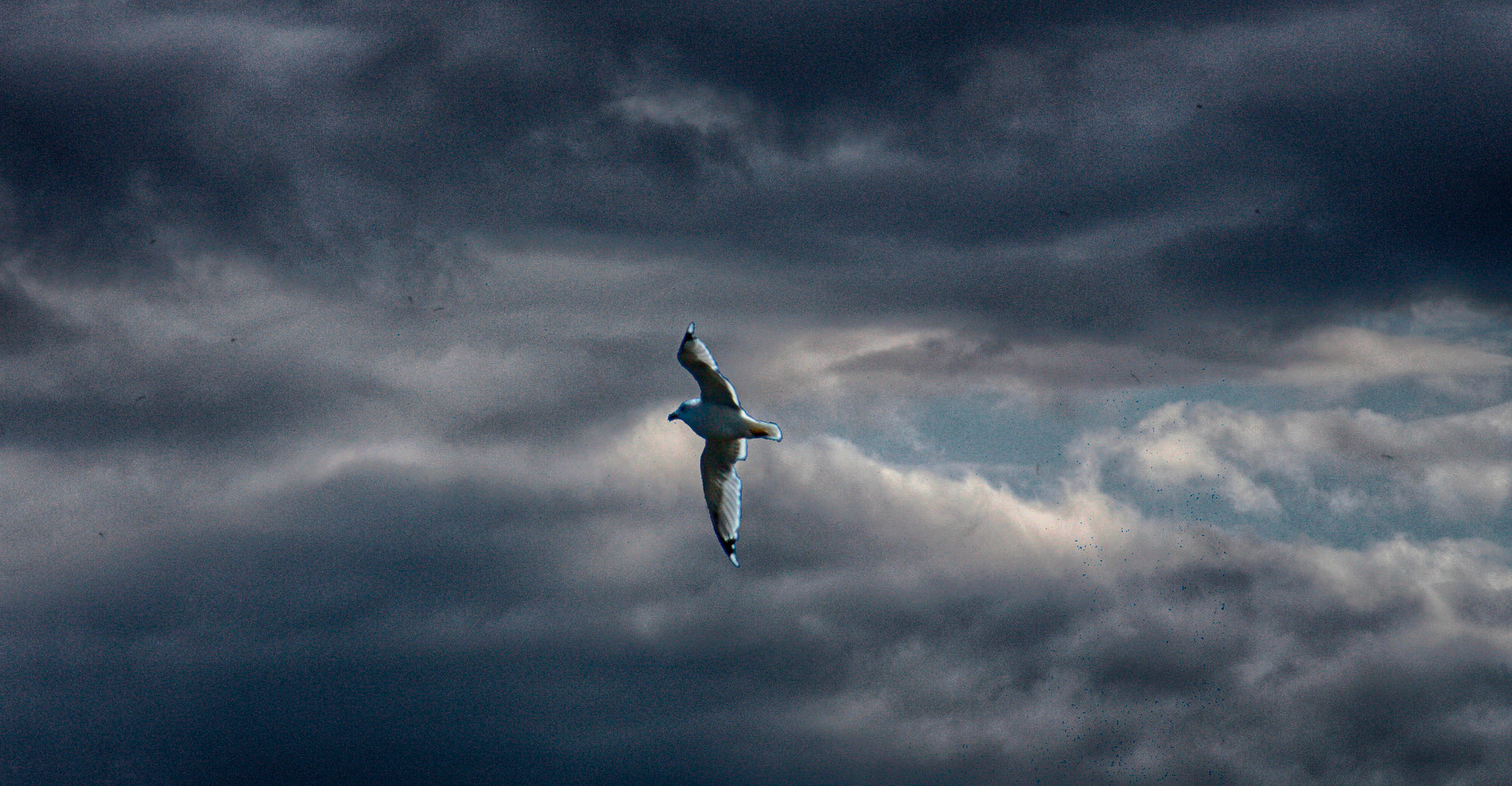 Fly High; . . . It Is Your Destiny!!