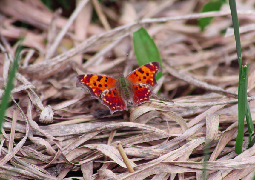 A Handsome Comma