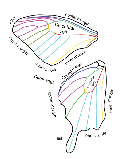 wing-svg-butterfly-1.png