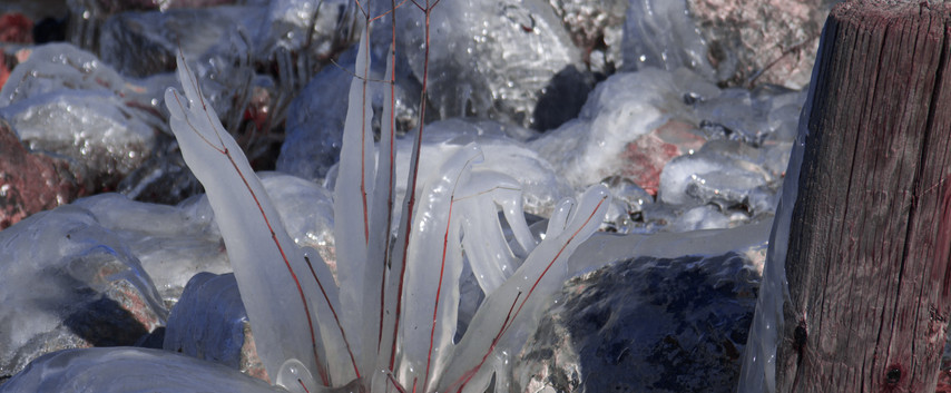 Okeefenokee Ice