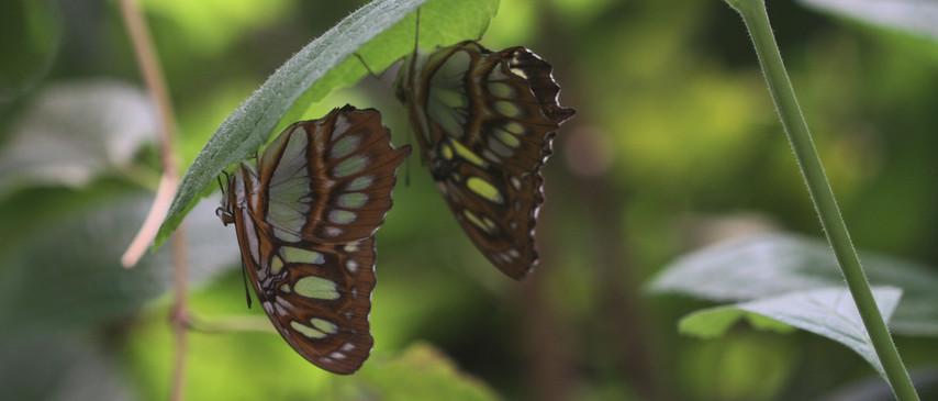 A Pair Of Malachites
