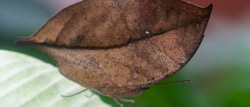 Leaf (Ventral side)