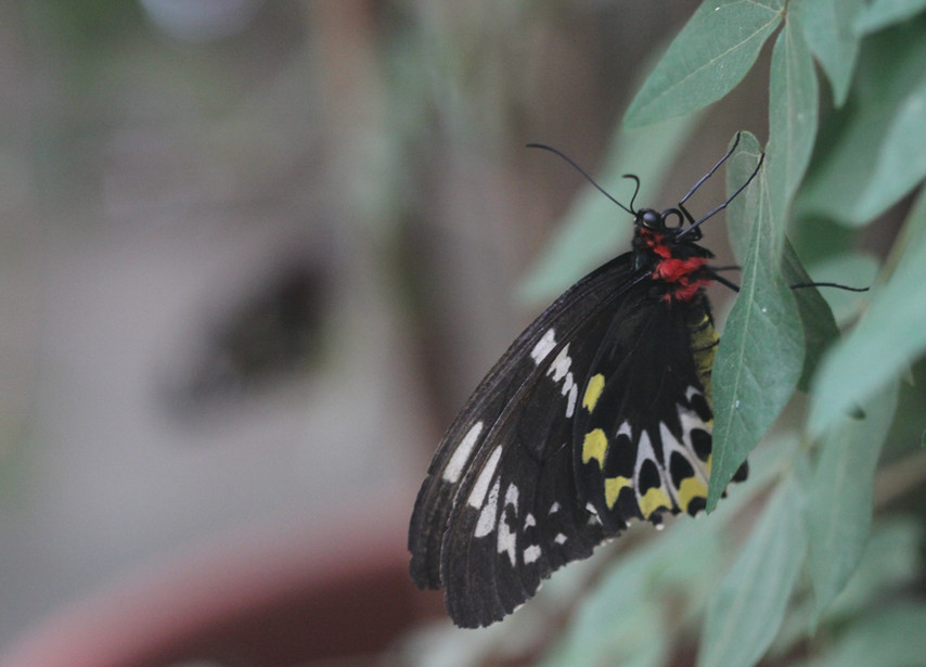 A Distinctive Female Cairns
