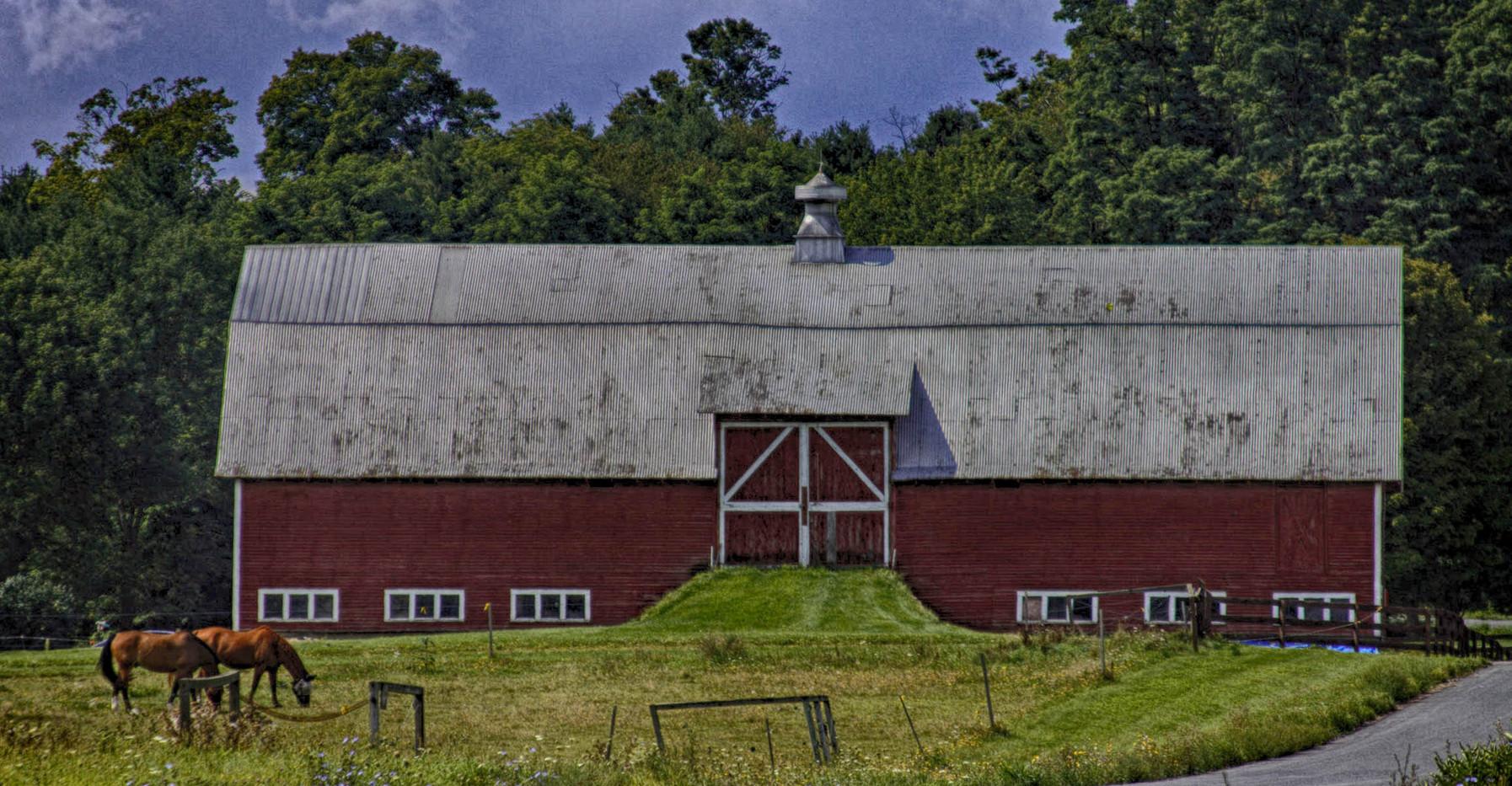 A Morgan Horse Farm
