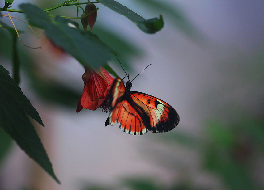 A Longwing On A Flower