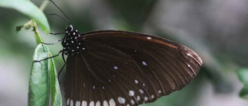 A Crow Up Close
