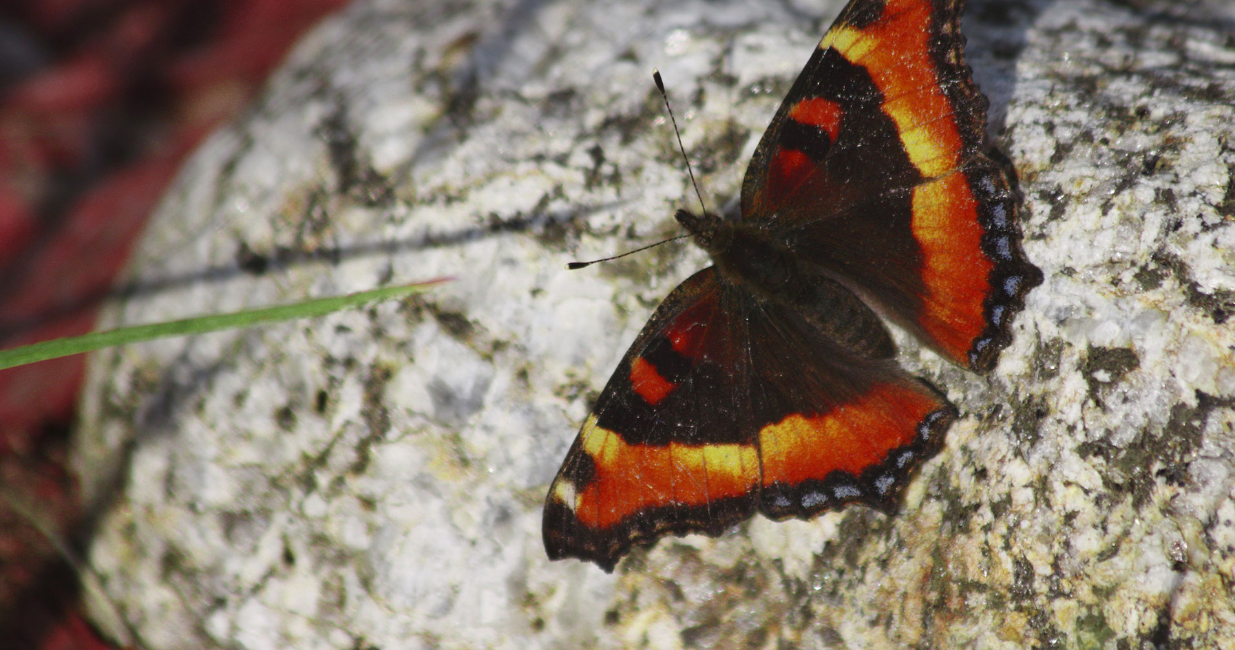 A Tortoiseshell And A Rock