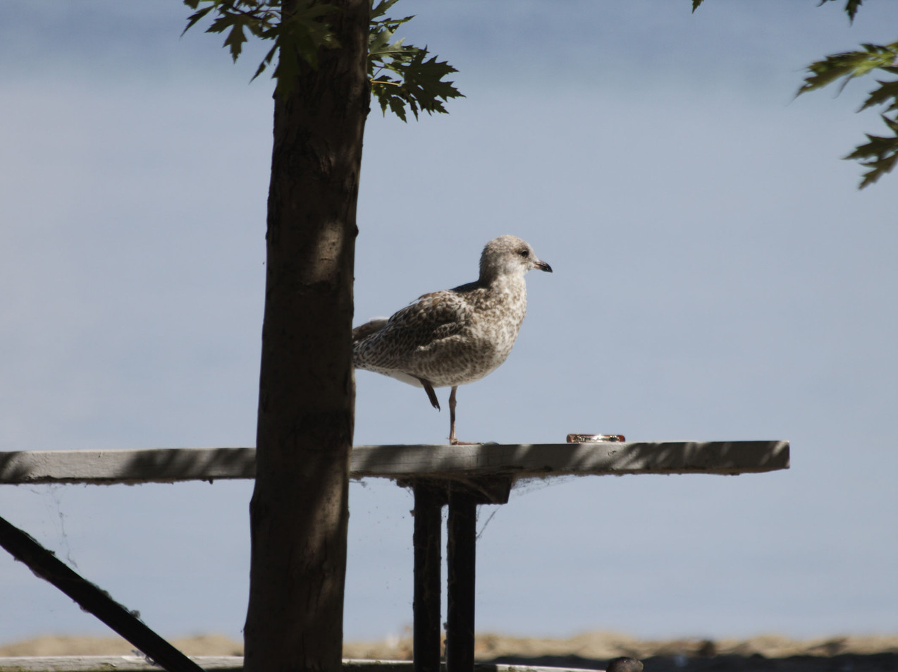 A Seagull And A Bracelet