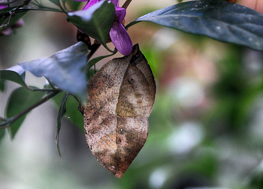 A Leaf (Ventral view)