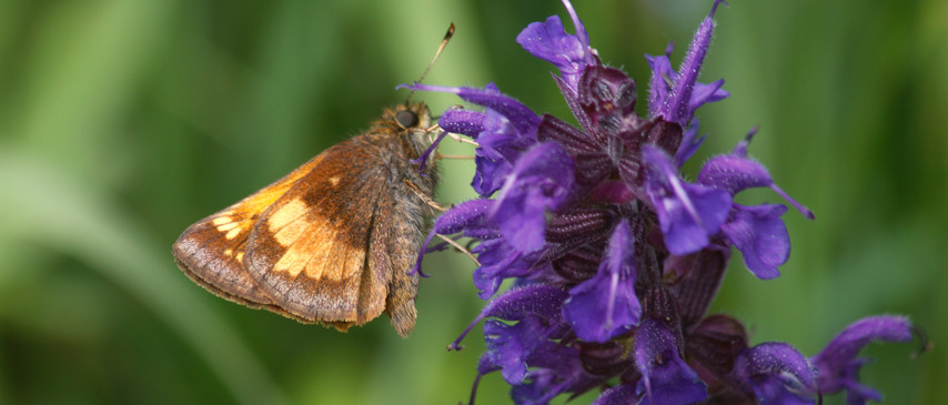 A Skipper Pose