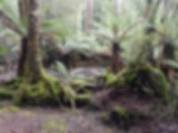 Fairy glen Geeveston.jpg