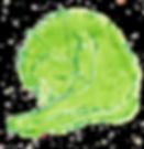green cat.png