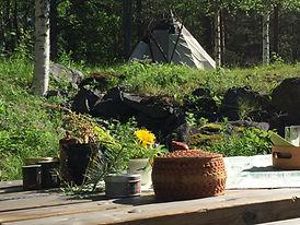 flavors botanical garden Jokkmokk-Essens