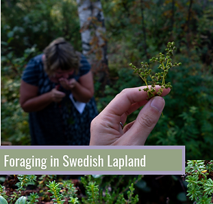 Foraging-in-Swedish-Lapland.png