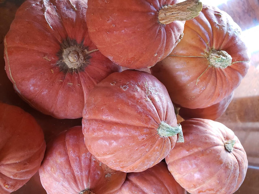 pumpkins abundance