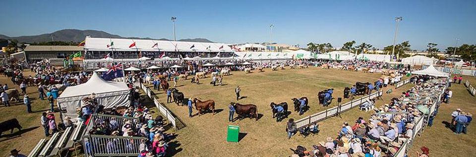 Beef-Australia.jpg