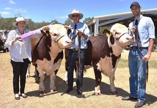Cooyar Show Feb 2019 Herefords PIC 1.jpg