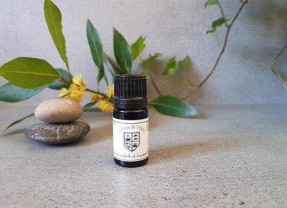 Lavande Fine Bio / Lavandula angustifolia  / Sommités Fleuries/ 5 ml