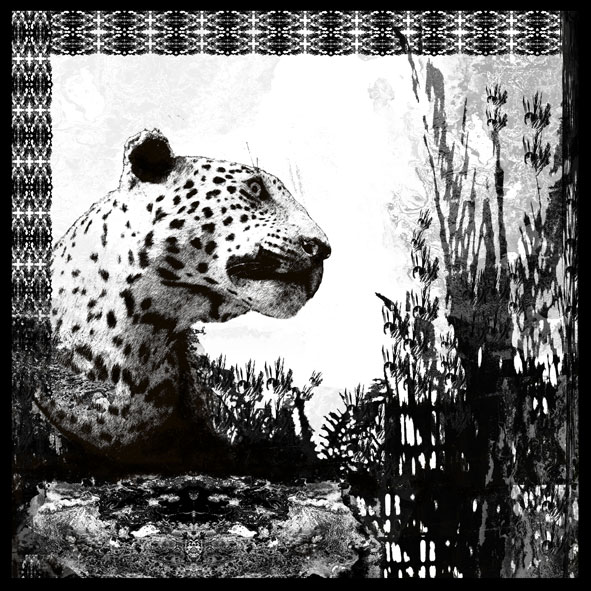 Booth Cheetah (print)