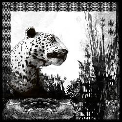 Booth Cheetah (print)