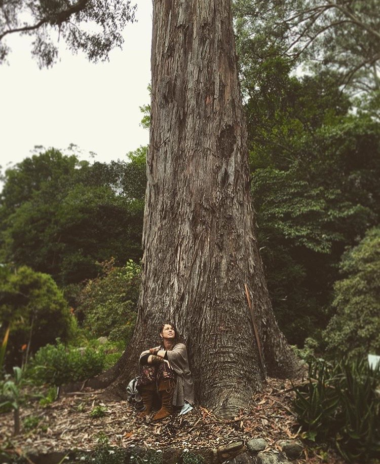 Not a Hippy, I just like big trees