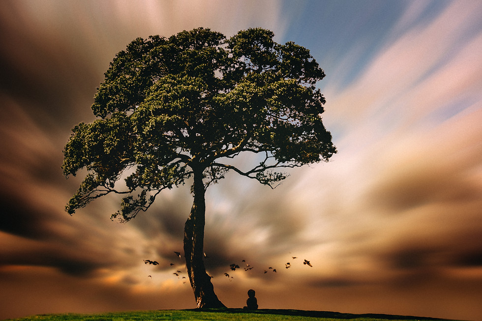 """""""Trees are earth's endless effort to speak to the listening heaven."""""""