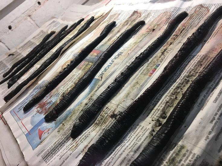 Black Lugworm