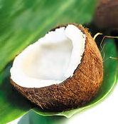 Coconut Pic .jpg