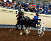 Leanne and Jazz Winning 2 yr Old cart at