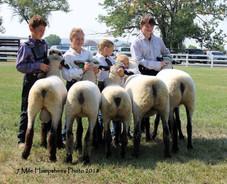 7 Mile Hampshires Flock