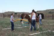 Equine Learning.jpg