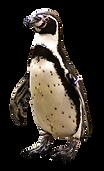 penguin-2691407_1280.png