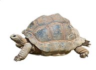turtle-2815539_1280.png